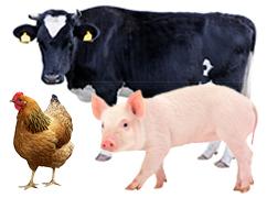 Rural-Semi-Rural animals